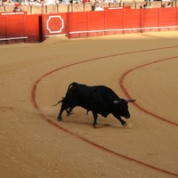 sevilla - bullfight